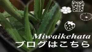 Miwaikehata blog